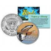 BLACK-BELLIED WHISTLING DUCK Collectible Birds JFK Kennedy Half Dollar Colorized Coin